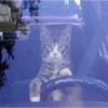 invalid/handicapped divorce - last post by toonces
